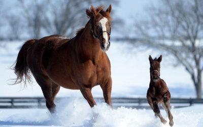 Taylor Made Horse Farm