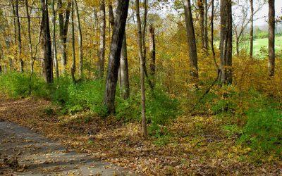 Asbury Trails