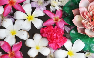 Nicholasville Florist & Giftshop