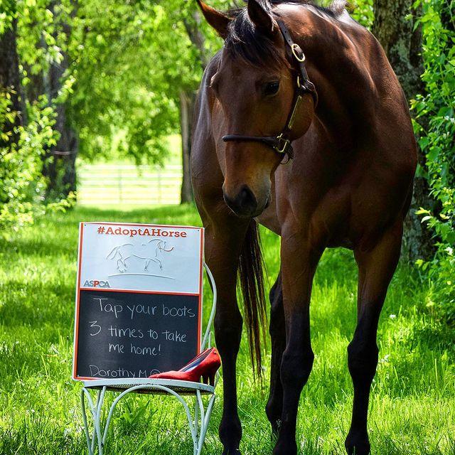 Kentucky Equine Adoption Center